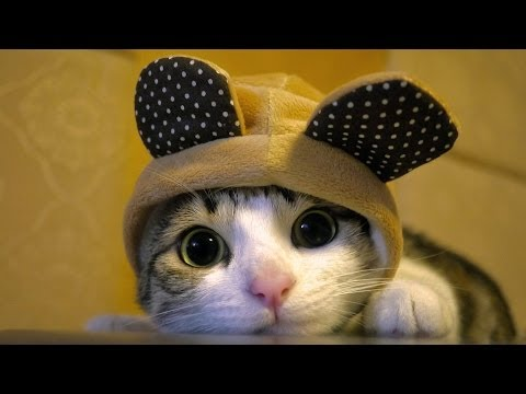 Ultimate Funny Cats Compilation  Best Moments