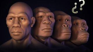 Los 5 Misterios Más Grandes de la Evolución Humana