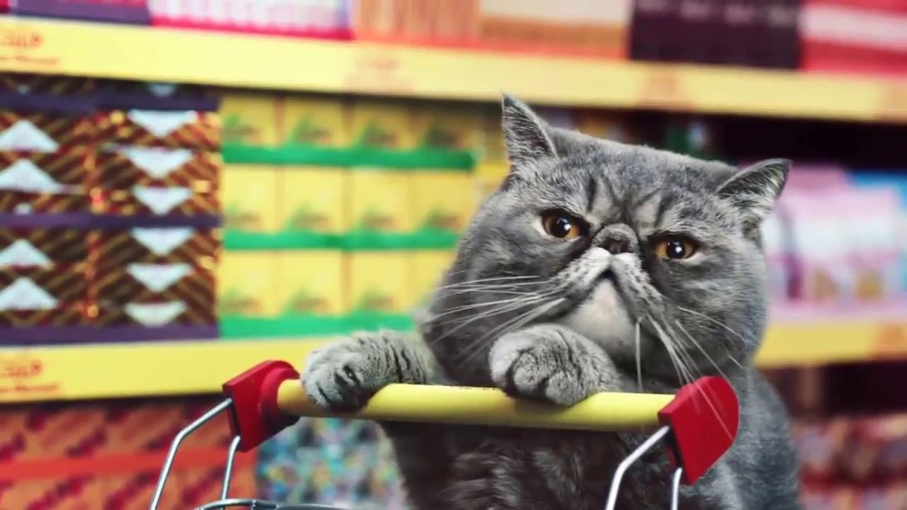Lustige Katzen Youtube