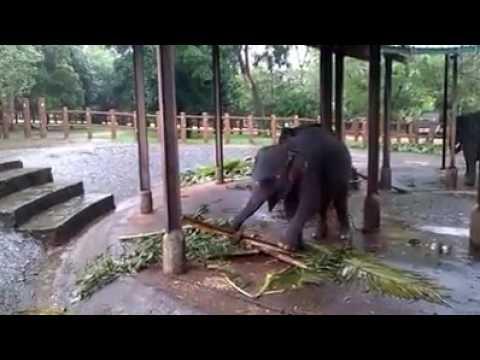 Intelligent Baby Elephant