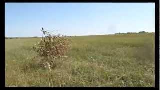 Смотреть клип Игорь Растеряев - Веселей