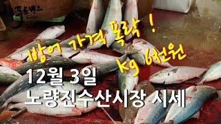 [최신시세정보]  겨울 방어 가격 폭락!!! 단돈 kg…