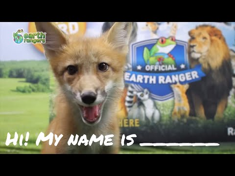Fox Cubs Reveal Their Names