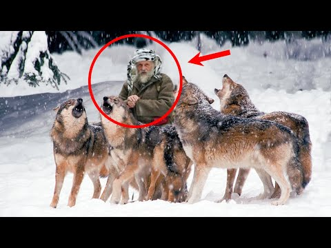 Дед в одиночку выходил пятерых ВОЛЧАТ, а спустя много лет волки отдали свой ПОСЛЕДНИЙ ДОЛГ..