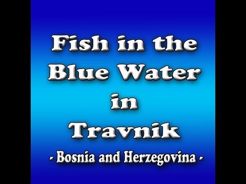 Fish in the Blue Water,Travnik - Bosnia and Herzegovina