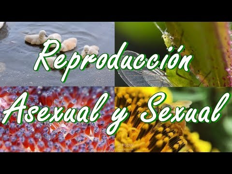 Reproduccion sexual y reproduccion asexual diferencias