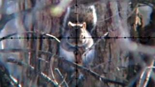 Air Rifle Squirrel Hunting Slow-Motion (Jan 21, 2011)