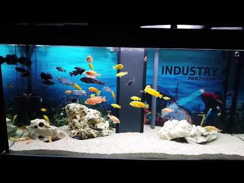 Malawi 500 L Aquarium