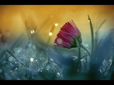 Relaxing Music: Soothing Music, Meditation Music, Calming Peaceful Harp Music (Unwind Your Soul)