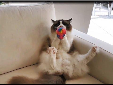 Cat is having fun, playing ball