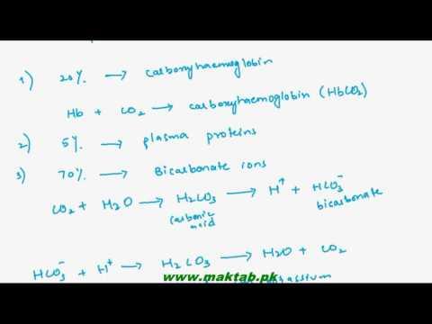 FSc Biology Book1, CH 13, LEC 11: Transport of Respiratory Gases-Carbondioxide Gas