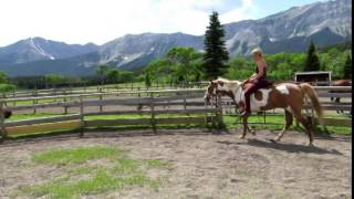 Adopted /Sold Apache ,8 Year old broke Paint Gelding for Adoption Lunbreck`1400$