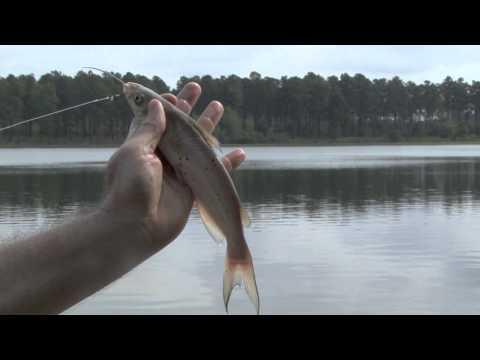 Public Fishing Areas - Panfish And Catfish