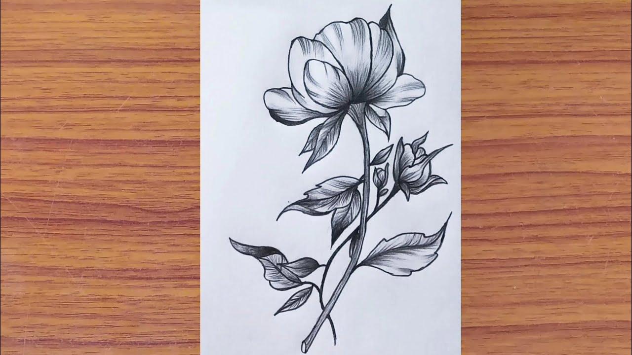 "Pencil Drawing of Beautiful Flower "" Farjana Drawing ..."