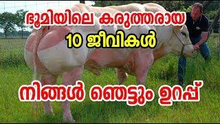 Top 10 Strongest Animals on Earth ! ഭൂമിയിലെ കരുത്തര് ആയ 10 ജീവികള് | നിങ്ങള് ഞെട്ടും