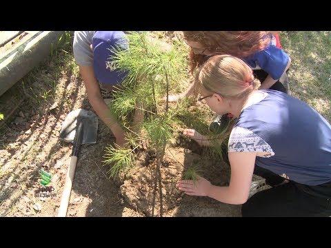 Посадка деревьев в рамках акции «Спасти и сохранить»