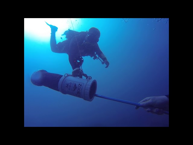Roger gets stung by a venomous Lionfish - What not to do! Video made in Portabello, Panama