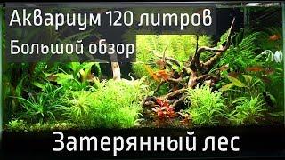 120 литровый аквариум Затерянный лес.  Большой обзор.
