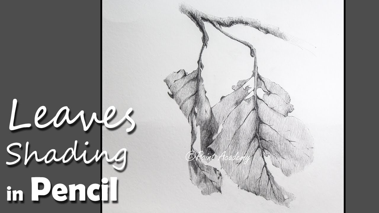 Pencil drawing techniques how to shade leaves in pencil