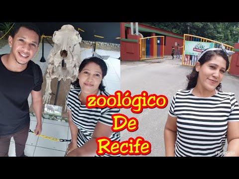 Zoológico De Recife/ Tour. Yasmim Silva Kheuy