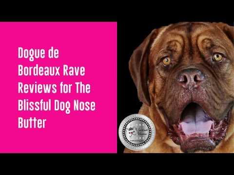 Dogue de Bordeaux Nose Butter Rave Reviews