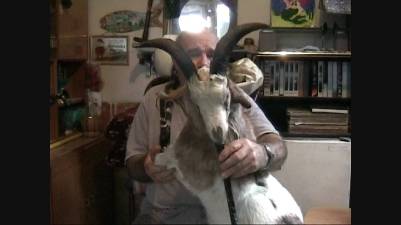 The Goat Bagpipes With Huge Horns Gaida Gajda гајда