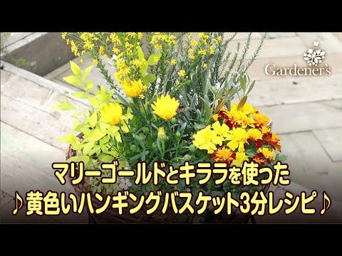 寄せ植え3分レシピ ♪マリーゴールドとキララを使った黄色いハンギングバスケット