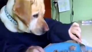 Cane mangia a tavola! Dog eats at the table! Perro come en la mesa! thumbnail