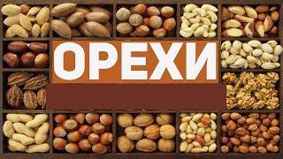 Орехи - названия с картинками для детей!