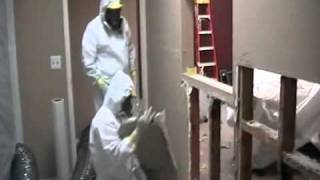 Mold removal /mould remediation