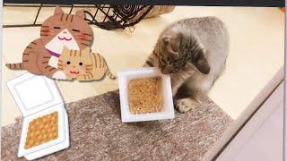子ネコに納豆を奪われる家(+いいご報告アリ)