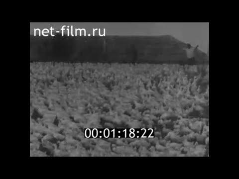 1960г. Совхоз Суровикинский  Суровикино Волгоградская область