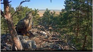 видео Веб камеры природа