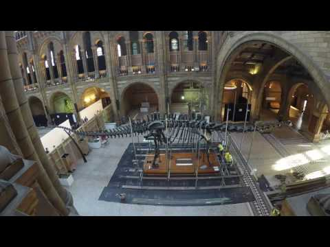 Timelapse of Dippy the Dinosaur being dismantled at the Natural History Museum