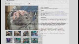 Pet Rescue—spring Holidays '10