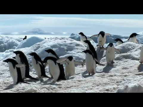 Antarctic Sights and Sounds