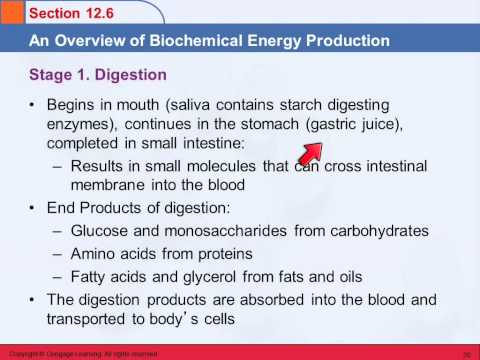 3B 12 Biochemical Energy Production