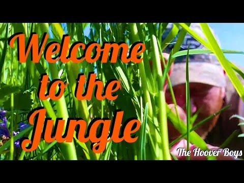 Metal Detecting LONG Grass, #23 Welcome to the Jungle