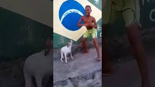 Танцующая собака.