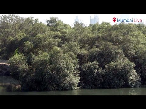 Metro-3 project now vies for mangroves | Mumbai Live