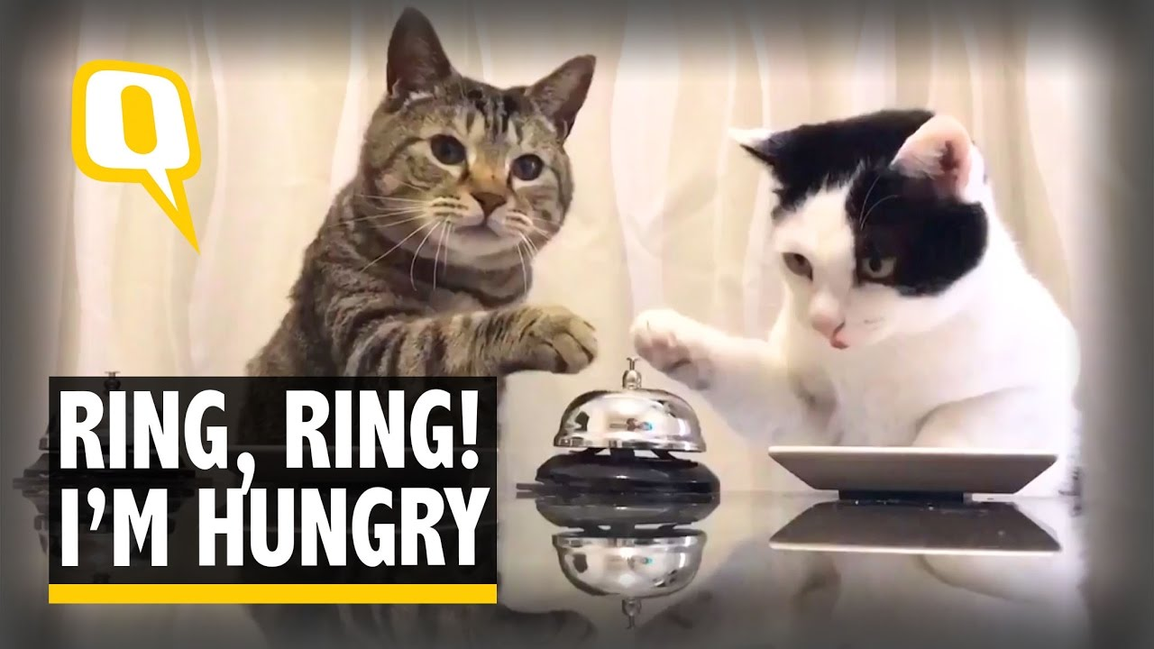 how to tell if a cat is hungry