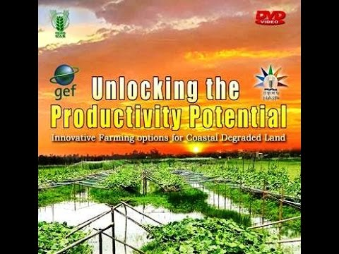 Unlocking the Productivity Potential | NAIP | ICAR-CSSRI | Canning | WB