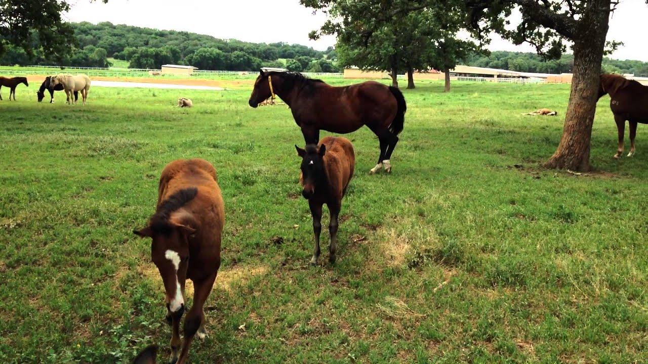 """mares horse""的图片搜索结果"
