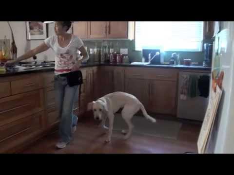 Category: Barking - Dr. Sophia Yin – The Art & Science ...