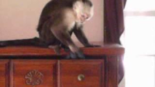Deekie the Monkey