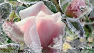 Лариса долина-цветы под снегом