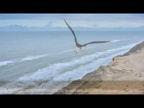 Neil Diamond - Dear Father - Jonathan Livingston Seagull - with Lyrics