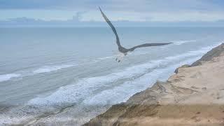 Neil Diamond - Dear Father - Jonathan Livingston Seagull - with Lyrics