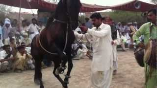 horse dance 2012 masood billa Azad Kashmir sorakhi