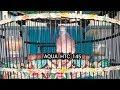 Suara Perkutut Bangkok Power Full Cocok Buat Indukan Ring Aqua Bird Farm Gacor(.mp3 .mp4) Mp3 - Mp4 Download
